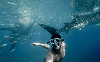 J'ai nagé avec les requins